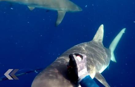 960x614_video-fait-attaquer-deux-requins-rewind.jpg